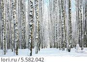Купить «Зимний лес», фото № 5582042, снято 28 января 2014 г. (c) Елена Ковалева / Фотобанк Лори
