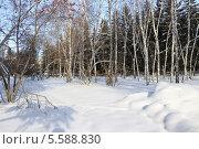 Купить «Зимний пейзаж. В смешанном лесу», фото № 5588830, снято 7 февраля 2014 г. (c) Светлана Ильева (Иванова) / Фотобанк Лори
