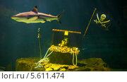 Купить «Акулы плавают вокруг сундука с сокровищами», видеоролик № 5611474, снято 4 февраля 2014 г. (c) pzAxe / Фотобанк Лори