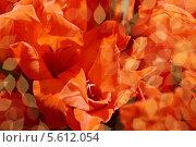Купить «Красивые красные цветы крупным планом», фото № 5612054, снято 19 августа 2012 г. (c) Наталья Спиридонова / Фотобанк Лори