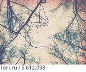 Купить «Старая потемневшая бумага с ветками деревьев без листьев», иллюстрация № 5612098 (c) Анна Павлова / Фотобанк Лори