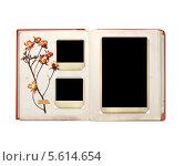 Купить «Фотоальбом с фотографиями и засушенными розами», иллюстрация № 5614654 (c) Лукиянова Наталья / Фотобанк Лори