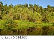 Купить «Река Ресса, Калужская область», эксклюзивное фото № 5614670, снято 13 июля 2011 г. (c) Елена Коромыслова / Фотобанк Лори