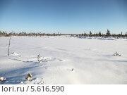 Купить «Снежный пейзаж. Болото в Югре. Западная Сибирь», эксклюзивное фото № 5616590, снято 4 ноября 2012 г. (c) Валерий Акулич / Фотобанк Лори