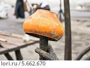 Купить «Старый чугунок», эксклюзивное фото № 5662670, снято 17 марта 2013 г. (c) Алёшина Оксана / Фотобанк Лори