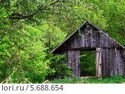 Деревянный сарай с открытой дверью в лесу. Стоковое фото, фотограф Вадим Келин / Фотобанк Лори