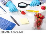 Сотрудник лаборатории фитоконтроля внимательно рассматривает клубнику через лупу. Стоковое фото, фотограф verbaska / Фотобанк Лори