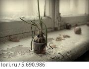 Лук. Стоковое фото, фотограф Онипенко Михаил / Фотобанк Лори
