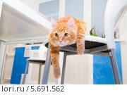 Купить «Кот лежит и свисает со стула», фото № 5691562, снято 22 декабря 2013 г. (c) Андрей Воробьев / Фотобанк Лори