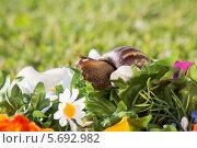 Купить «Улитка в искусственных цветах», фото № 5692982, снято 21 июня 2013 г. (c) Losevsky Pavel / Фотобанк Лори
