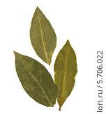Купить «Три лавровых листа», фото № 5706022, снято 27 сентября 2011 г. (c) Natalja Stotika / Фотобанк Лори