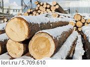 Купить «Сосновые бревна под снегом», фото № 5709610, снято 28 января 2014 г. (c) Дмитрий Калиновский / Фотобанк Лори