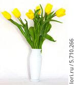 Жёлтые тюльпаны в белой вазе на белом фоне. Стоковое фото, фотограф Виктор Шушурин / Фотобанк Лори