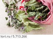 Купить «Мешочек с сушеными листьями мяты и смородины для чая», фото № 5713266, снято 27 августа 2012 г. (c) Архипова Мария / Фотобанк Лори