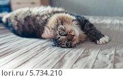 Купить «Серый кот лежит на кровати», фото № 5734210, снято 9 февраля 2014 г. (c) Валерия Потапова / Фотобанк Лори
