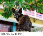 Портрет маленького уличного черного котенка, Индонезия. Стоковое фото, фотограф Nikolay Grachev / Фотобанк Лори