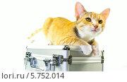 Купить «Рыжий котенок лежит на чемодане», видеоролик № 5752014, снято 28 марта 2014 г. (c) Серёга / Фотобанк Лори