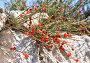 Купить «Хвойник двухколосковый (эфедра)», фото № 5754078, снято 1 октября 2012 г. (c) Анна Мартынова / Фотобанк Лори