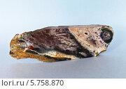 Купить «Природный минерал яшма красивой пестро-полосатой структуры», эксклюзивное фото № 5758870, снято 17 марта 2014 г. (c) Виктория Катьянова / Фотобанк Лори