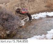Ослик с телегой, груженной ветками, пьет из ручья. Стоковое фото, фотограф Анастасия Виноградова / Фотобанк Лори