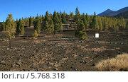 Купить «Национальный парк Тейде, Тенерифе», видеоролик № 5768318, снято 24 декабря 2013 г. (c) Roman Likhov / Фотобанк Лори