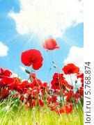 Цветущие красные маки в поле. Стоковое фото, фотограф Сергей Новиков / Фотобанк Лори