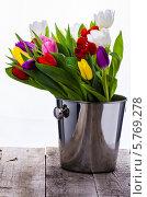 Тюльпаны в металлическом ведре. Стоковое фото, фотограф Olena Gorbenko / Фотобанк Лори