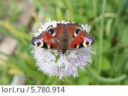 Бабочка. Стоковое фото, фотограф Екатерина / Фотобанк Лори