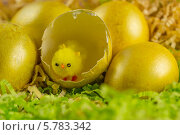 Цыплёнок в скорлупе. пасхальные яйца. Стоковое фото, фотограф Сергей Филимончук / Фотобанк Лори