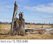 Купить «Пейзаж весенний», фото № 5783646, снято 6 апреля 2014 г. (c) Александр Романов / Фотобанк Лори