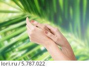 Купить «Ухоженные женские руки на фоне зеленой ветки пальмы», фото № 5787022, снято 6 марта 2013 г. (c) Syda Productions / Фотобанк Лори