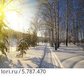 Солнечный день в зимнем лесу. Стоковое фото, фотограф Анфимов Леонид / Фотобанк Лори