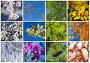 Двенадцать месяцев. Коллаж из растительных фонов разных времен года, фото № 5808290, снято 26 ноября 2013 г. (c) Виктория Катьянова / Фотобанк Лори