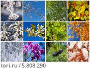 Двенадцать месяцев. Коллаж из растительных фонов разных времен года. Стоковое фото, фотограф Виктория Катьянова / Фотобанк Лори