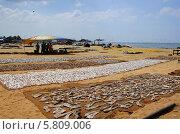 Сушка морской рыбы на берегу Индийского океана (2014 год). Стоковое фото, фотограф Сергей Воронин / Фотобанк Лори