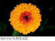 Жёлтый цветок. Стоковое фото, фотограф Пушкина Ольга / Фотобанк Лори