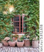Приоткрытое окно старого дома в обрамлении плетущегося девичьего винограда, под ним на брусчатке расставлены вазоны с цветами. Стоковое фото, фотограф Мартынова Наталия / Фотобанк Лори