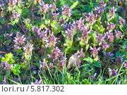 Купить «Солнечная поляна с весенними цветами», эксклюзивное фото № 5817302, снято 13 апреля 2014 г. (c) Svet / Фотобанк Лори
