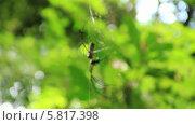Купить «Паук появляется из листвы», видеоролик № 5817398, снято 25 сентября 2013 г. (c) Roman Likhov / Фотобанк Лори