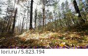 Купить «Осенний лес», видеоролик № 5823194, снято 5 января 2012 г. (c) Виталий Зверев / Фотобанк Лори