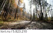 Купить «Осенний лес», видеоролик № 5823210, снято 5 января 2012 г. (c) Виталий Зверев / Фотобанк Лори