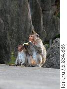 Две симпатичные обезьянки. Стоковое фото, фотограф Наталья Стасенко / Фотобанк Лори