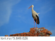 Аист на развалинах. Стоковое фото, фотограф Юрий Зотов / Фотобанк Лори