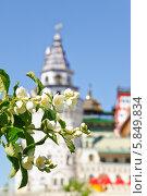 Цветущий чубушник в Измайлове (2012 год). Редакционное фото, фотограф Алёшина Оксана / Фотобанк Лори