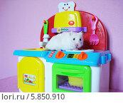 Купить «Белый хомяк ползает по игрушечной детской кухне», фото № 5850910, снято 16 апреля 2014 г. (c) Юрий Серебряков / Фотобанк Лори
