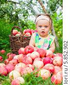 Маленькая девочка с корзиной красных яблок. Стоковое фото, фотограф Оксюта Виктор / Фотобанк Лори