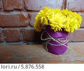 Желтые цветы в фиолетовом горшке. Стоковое фото, фотограф Юлия Романова / Фотобанк Лори