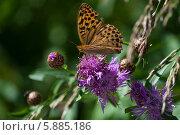 Бабочка. Стоковое фото, фотограф Анна Алексеенко / Фотобанк Лори