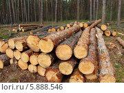 Сосновые бревна лежат в лесу. Стоковое фото, фотограф Амелия Дадабаева / Фотобанк Лори