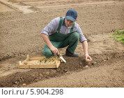 Купить «Пожилой человек сажает картофель в борозду», фото № 5904298, снято 10 мая 2014 г. (c) Александр Романов / Фотобанк Лори
